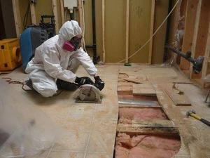 Mold Removal Basement Mold Removal